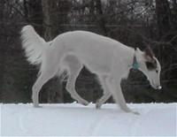 snownose.jpg