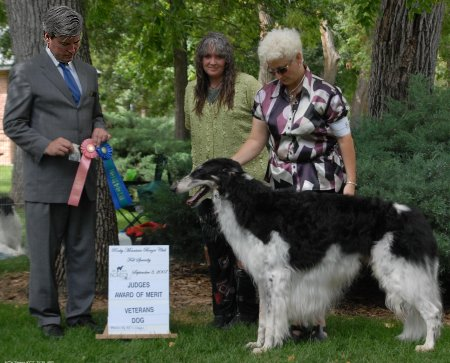 Arthur taking an Award of Merit at the Rocky Mountain Borzoi Club specialty show