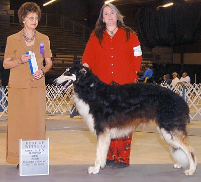 borzoi Deckard's first championship points