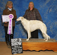 Deuce goes Best in Show at Castle Rock!! November 2015