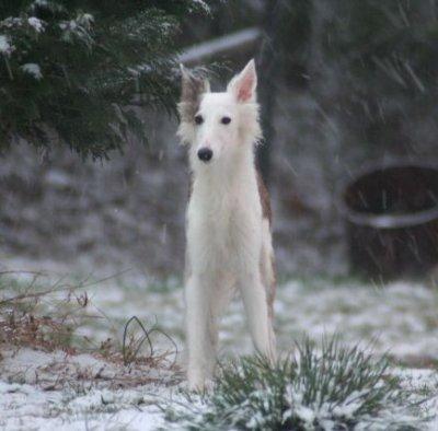 snowykitty2.jpg