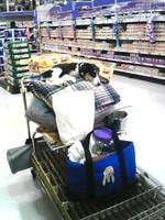 oksana_cart.jpg