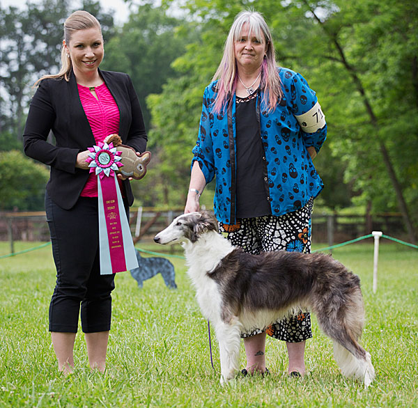 Quinni goes Best Opposite in Sweepstakes at the East Coast Silken Windhounds specialty, May 2016