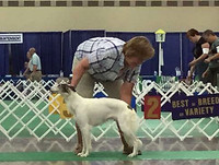 Smooches' UKC debut at the 2017 UKC Premier