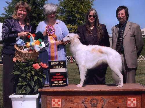 Tyler - three-time winner of the International Silken Windhound Society's national specialty show