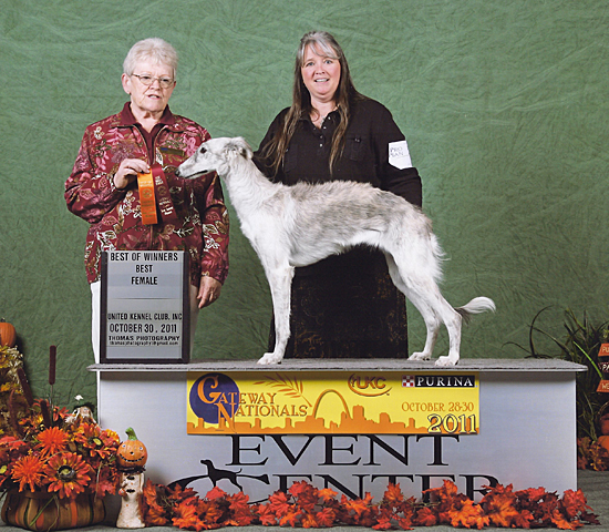 Silken Windhound Velvet's first win