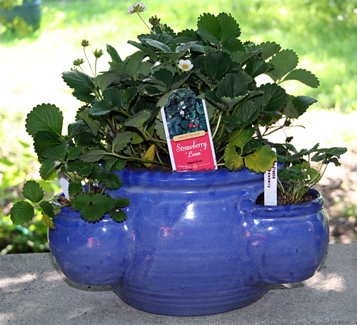 my new strawberry pot