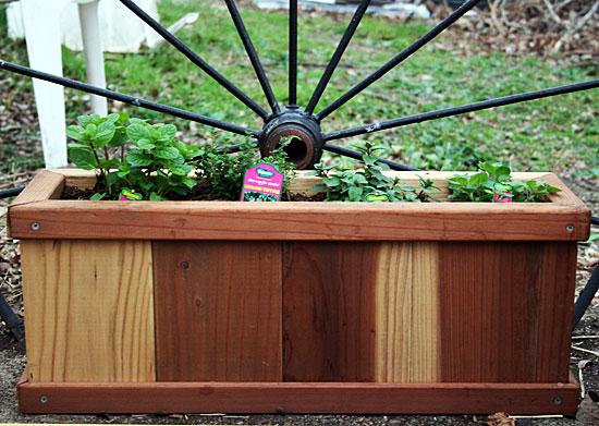 cedar box of herbs