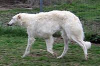 barbeekenIMG 4875