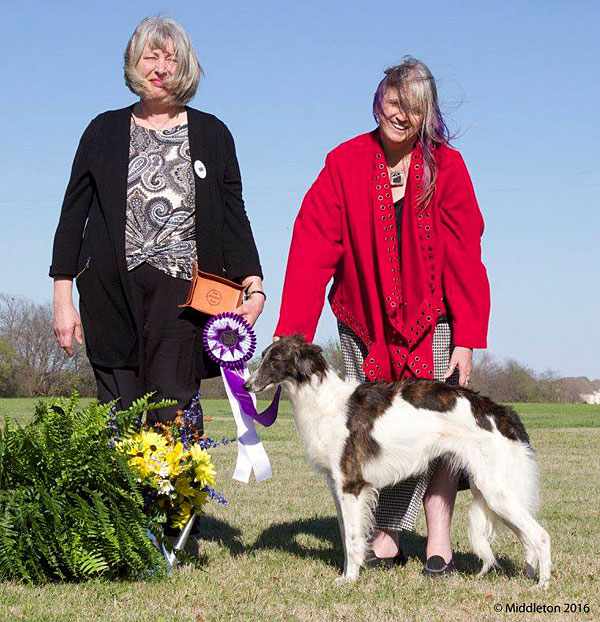 Farrah - Resesrve Winners Bitch at the Silken Windhound National