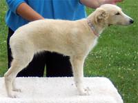 blondie-pup.jpg