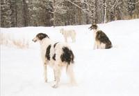 threehounds.jpg