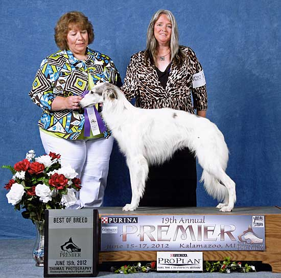 Pasha winning Best of Breed at the 2012 UKC Premier
