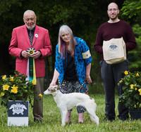 Best Puppy in Specialty - East Coast Silken Windhound Specialty Show
